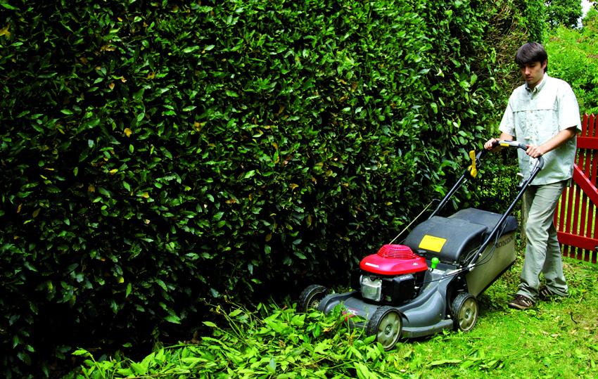 Broyage déchets verts