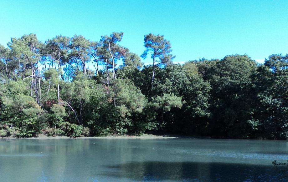 Forêt de Bodillo en bordure de la rivière de Pont-l'Abbé