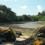 Bois de Roscouré - Combrit